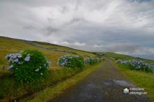 Una delle strade interne dell' isola di Faial
