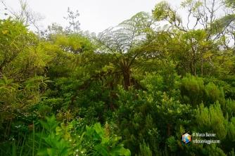 La lussureggiante vegetazione di Faial